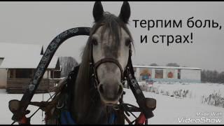 Риск конного спорта!