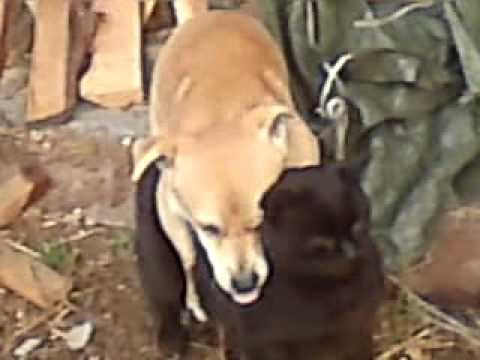 Pies Bzyka Kota Youtube