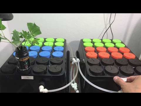 How to Clone Cannabis - Roots in 4 days! 100% success rate! High Pressure Aeroponics Cloner