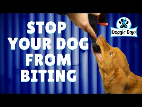 how-to-stop-a-dog-from-biting