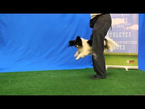 Cool Dog Tricks by talented Angus in outstanding Talent Hounds Audition