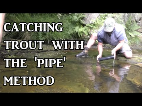 Catching wild trout by tickling and pipe method - survival skills