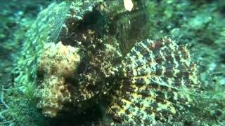 Jaime Burns The Diving Diaries Season 1   The Lembeh Straight   Sulawesi   Indonesia