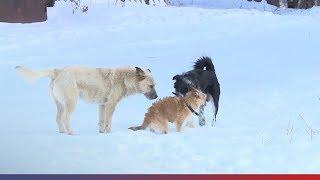 Налог на домашних собак предложили ввести на республиканском уровне