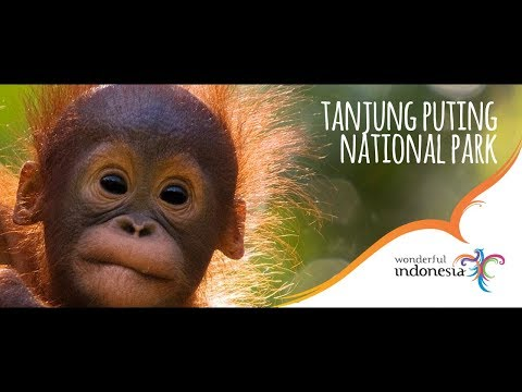 Tanjung Puting National Park - Central Kalimantan - Indonesia Tourism