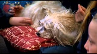 Jazz The Dog Teacher! | Hot Shots