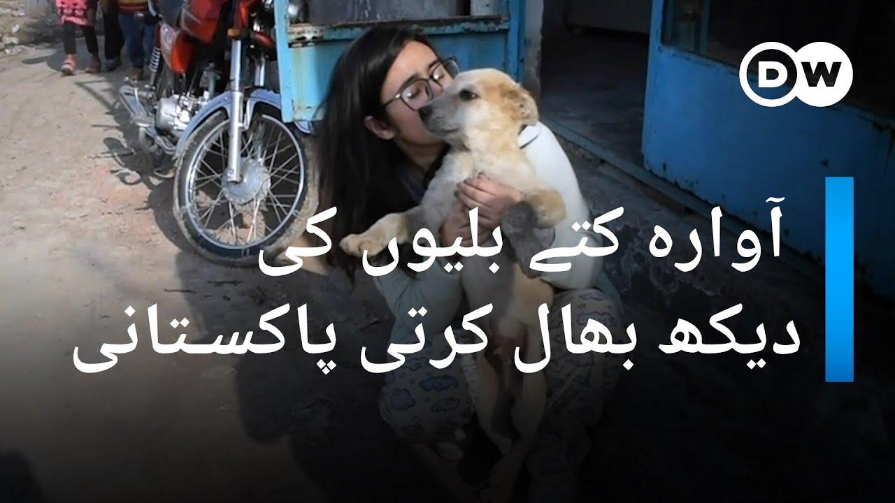 آوارہ کتے بلیوں کی دیکھ بھال کرتی پاکستانی نوجوان   DW Urdu