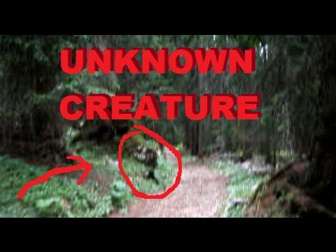 wtf unknown creature caught on tape incredible rare find