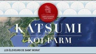 Présentation de KATSUMI Koi farm, dans la région de Niigata au Japo...