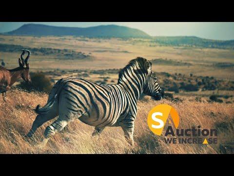 SA AUCTION GROUP | BREATH-TAKING GAME FARM