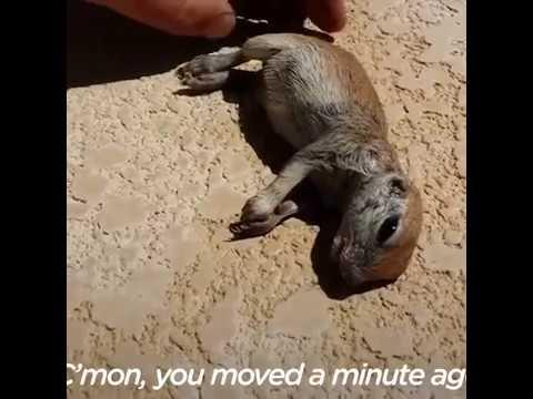 Quand cet homme a vu ce b b chien de prairie se noyer for Quand hiverner sa piscine
