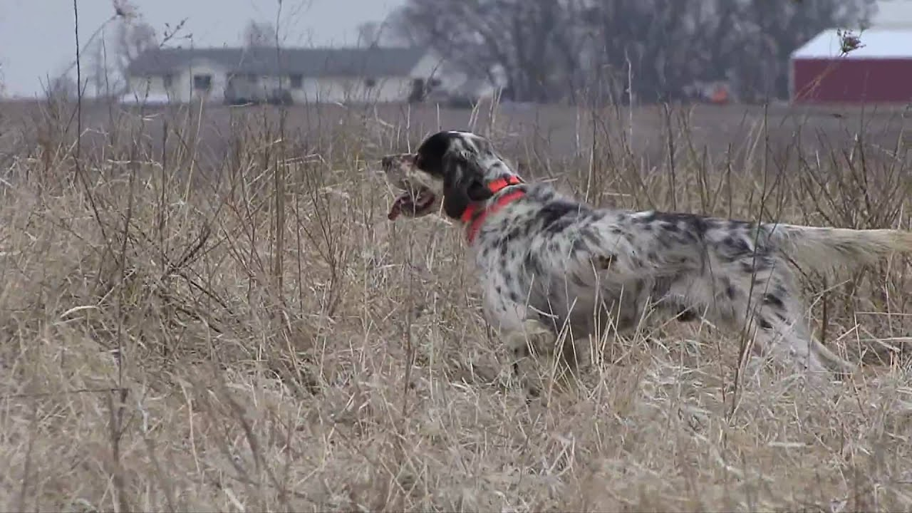 Chuckar partridge hunting mhf outdoors youtube for Iowa out of state fishing license