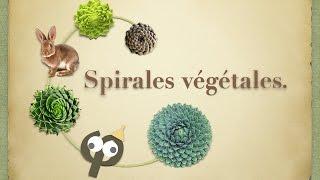 Spirales végétales, le nombre d