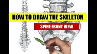 HOW TO DRAW A SKELETON: Spine drawing front view - Apple pencil tutorial on iPad Pro in Procreate