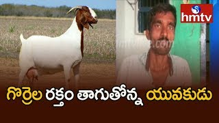 మేకల, గొర్రెల రక్తం తాగుతోన్న యువకుడు   Singampeta ,Wanaparthy District   hmtv Telugu News