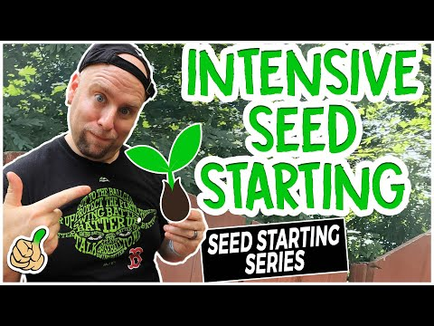 seed-starting-tips-&-techniques-|-intensive-seed-germination-option-|-seed-starting-series-part-4-🌱