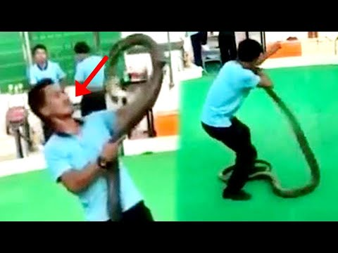 When Cobras Attack