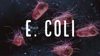 E coli enterohemorragica (O157:H7)