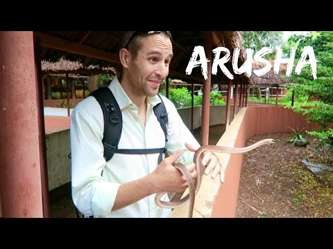 Tanzania Travel Vlog - Arusha, Tengeru | Ali Coultas