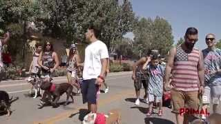 The 2015 Morgan Hill Freedom Parade W/primal Canine Dog Training