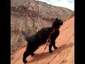 【感動】捨て猫だったミリー、世界一岩山が似合うロック・クライマー猫となる。
