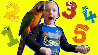 Learning how to count 1 to 5 with parrots. Martin and Monica