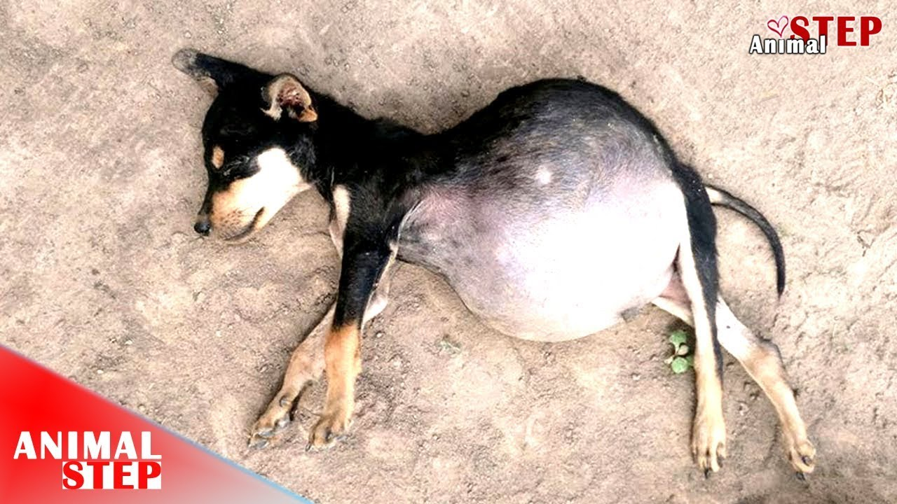 Remember? Ton of Fluid in His Abdomen, Finally He's Adopted – His Life's Absolutely Inspired Na