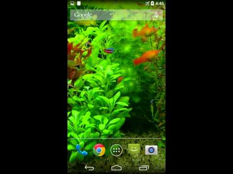 Real Aquarium 3D Video Live Wallpaper for Android (Free) - YouTube