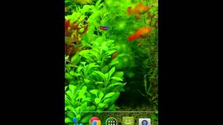 Real Aquarium 3D Video Live Wallpaper for Android (Free)