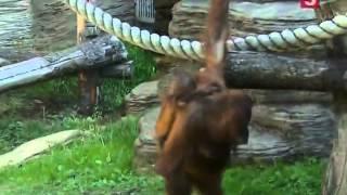 Московскому зоопарку 150 лет
