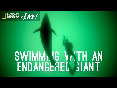 Swimming With an Endangered Giant | Nat Geo Live