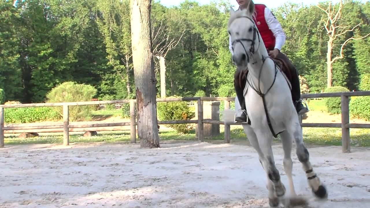 zoom-metier-marchand-de-chevaux