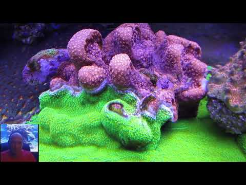 Tims Beautiful 400 Gallon Reef  1 Year Later  Coral Eye Candy   AmericanReef Reef Keeping