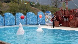 Акватория - театр морских животных в Ялте