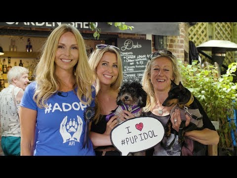 PUP IDOL 2017 - DOG SHOW - All Dogs Matter
