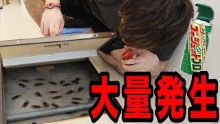 【超閲覧注意】新居にゴキブリがありえない数いたので撃退しようとしたら…。