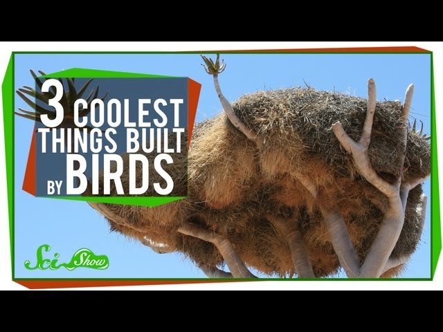The 3 Coolest Things Built By Birds