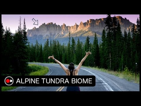 What lives in the Tundra Biome? from YouTube · Duration:  1 minutes 39 seconds