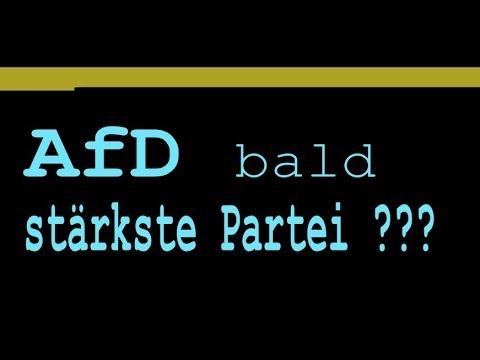 A F D bald stärkste Partei ? Martin Schulz weiß es besser...