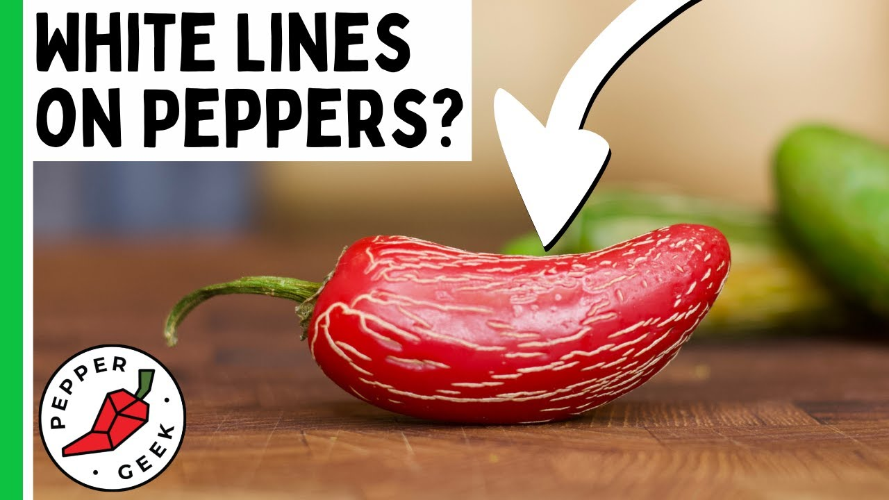 White Lines on Peppers - What is Pepper Corking? - Pepper Geek