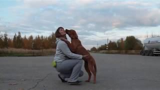 бурят-монгольская собака, Рус Кайлас Баярма, 4 мес