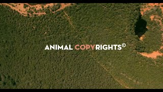 Animal Copyrights thumbnail