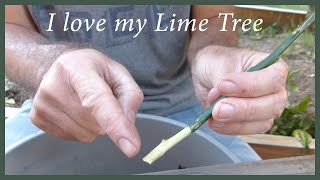 Growing Citrus From Cuttings: How To Keep A Tree You Love thumbnail
