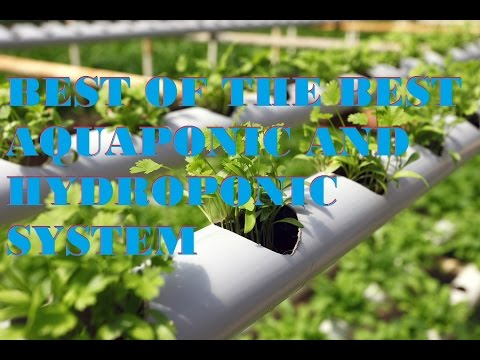 BEST OF DESIGN AQUAPONIC AND HYDROPONIC SYSTEM