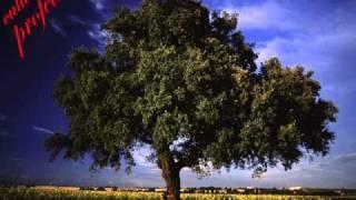 cultura profetica arboles