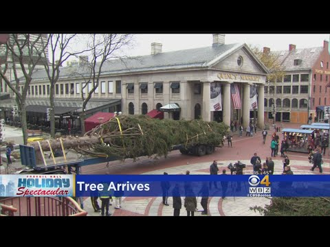 Faneuil Hall Christmas Tree Arrives In Boston