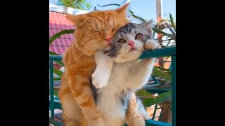 Funny Cats & Dogs Video Collection/ Time Spent with Pets Is Never Wasted/ Pet Owner's  Happy Time