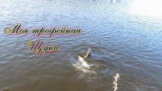 Рыбалка осенью на трофейную щуку на Baby Buster  Strike Pro видео отчет(Трофейная рыбалка крупной Щуки на Baby Buster Strike Pro видео отчет.Ловля щуки летом внушительных размеров довольн..., 2015-06-17T14:15:23.000Z)