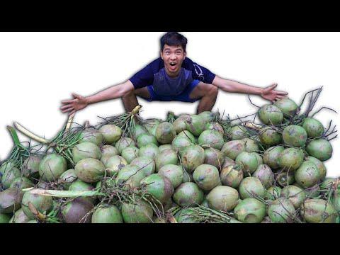 PHD | Thí Nghiệm 200 Quả Dừa Thu Được Bao Nhiêu Nước Dừa? | 200 Green Coconuts