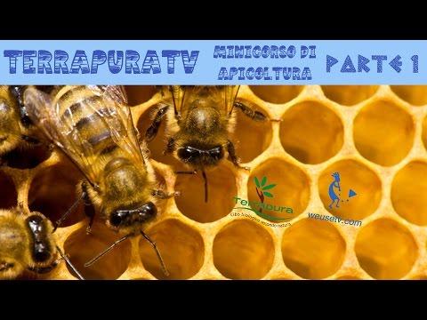 Corso di apicoltura (parte 1)
